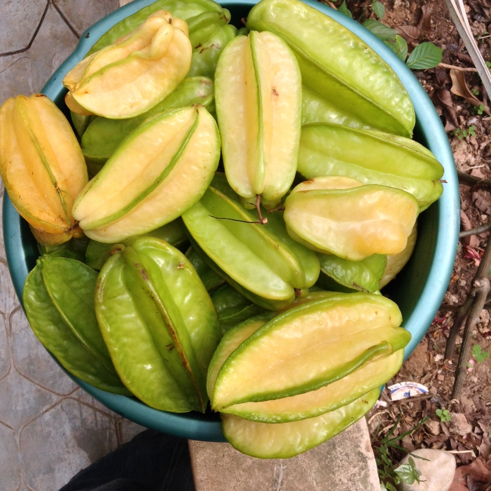 Star Fruit straight from the tree- ready for juicing. Ile-Ife