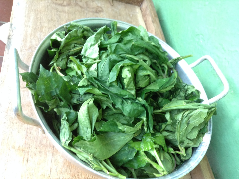 Fresh Ugu leaves