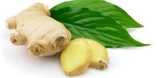 download ginger leaves
